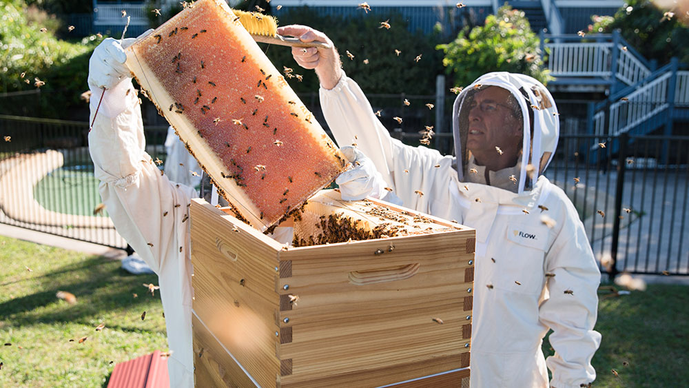 Inventing Flow Hive required a lot of trial and error