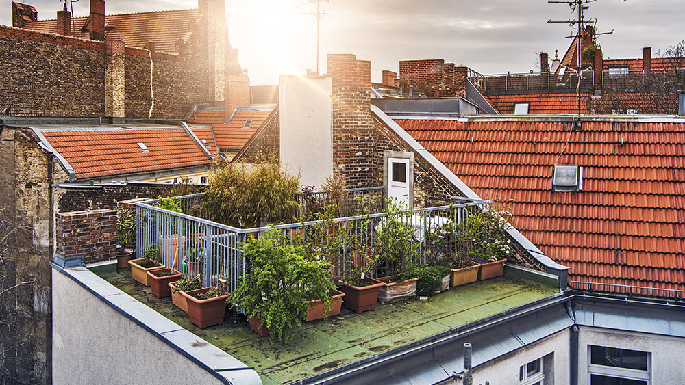 Rooftop gardens are becoming more popular