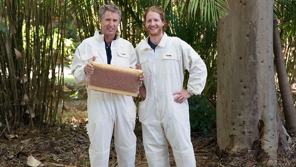 Honey bees are tiny environmental champions