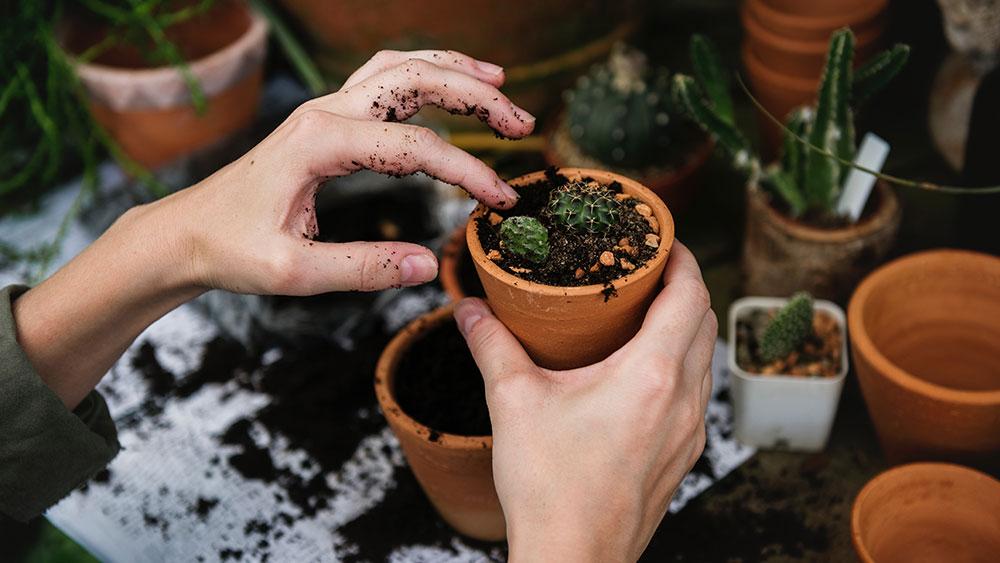 Building community around the environment