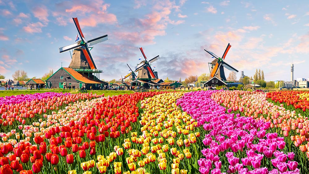 The best time to go to the Netherlands