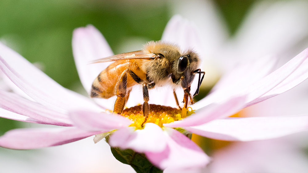 Honey bees are Stu's passion